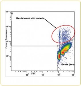 Flow cytometry measurement of 2.8micron bead
